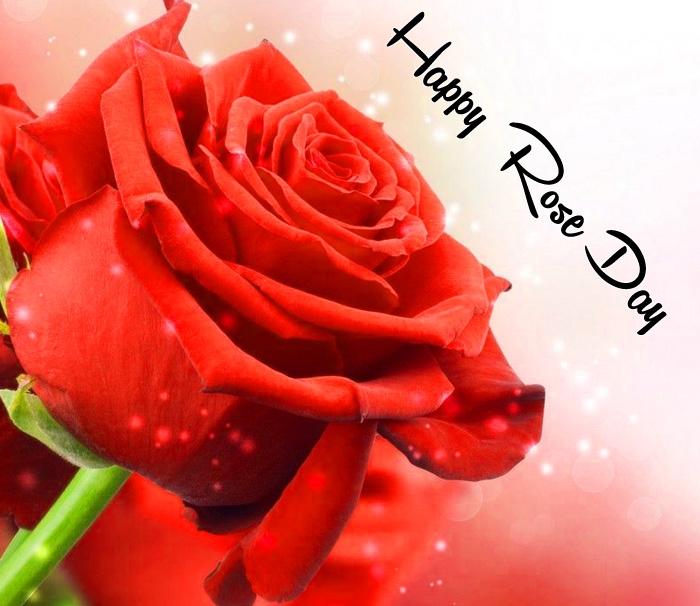 single flower Happy Rose Day wallpaper
