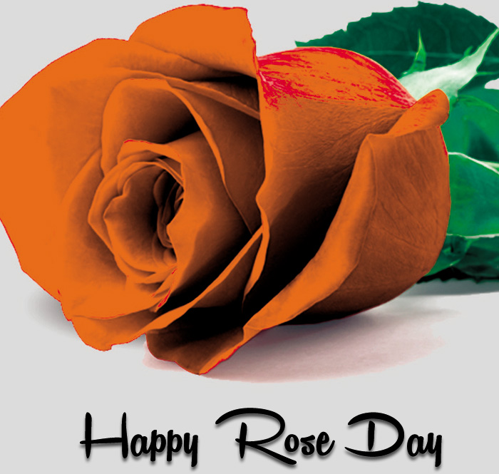 single sad flower Happy Rose Day hd photo