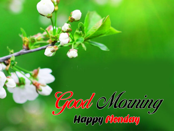 small white flower Good Morning Happy Monday images hd