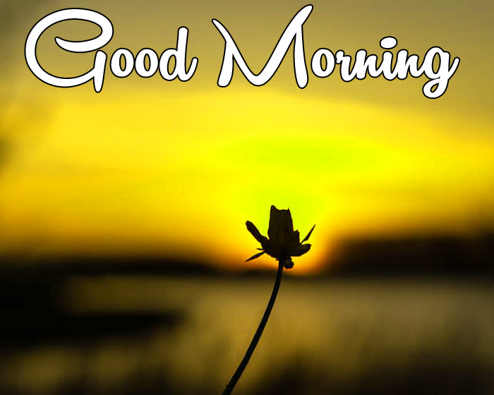 sunrise Good Morning alone flower wallpaper