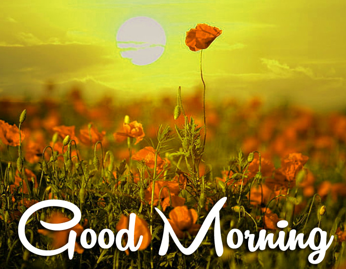 sunrise Good Morning poppy flower images hd