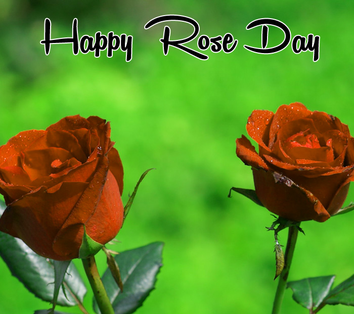 two flower Happy Rose Day hd