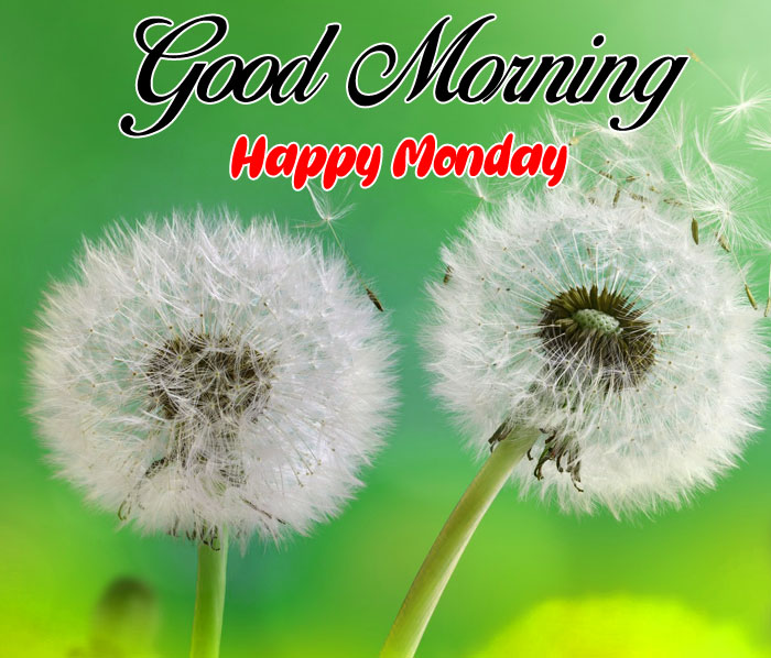 two white flower Good Morning Happy Monday images hd
