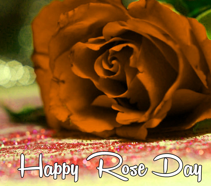 very sad flower Happy Rose Day hd