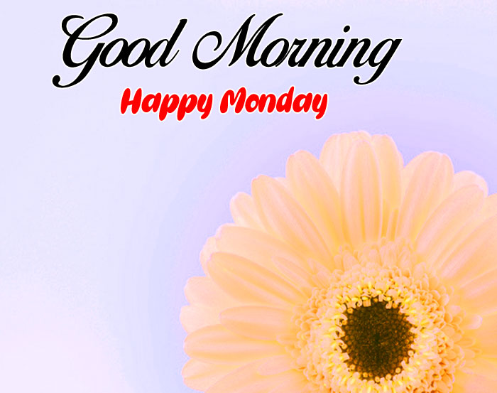 wand flower Good Morning Happy Monday images hd