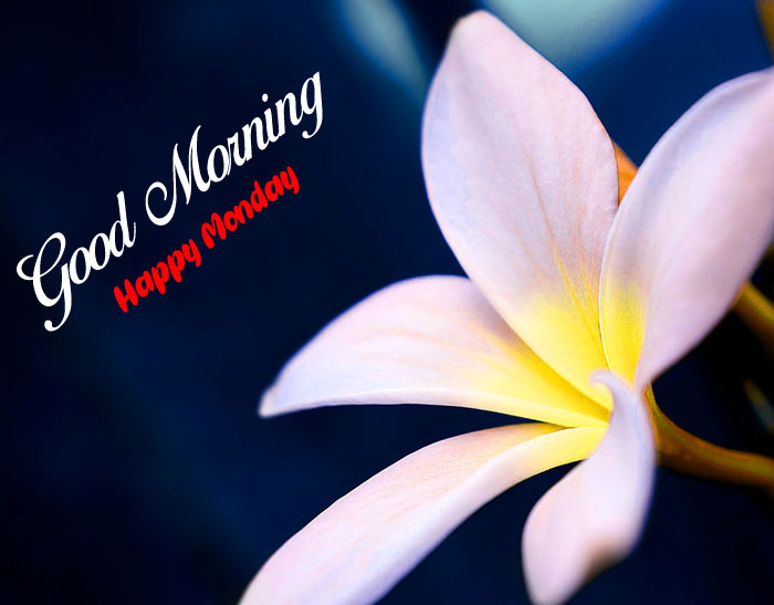 white Good Morning Happy Monday flower images