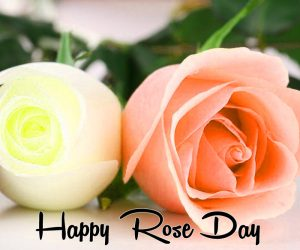 white and pink flower Happy Rose Day hd