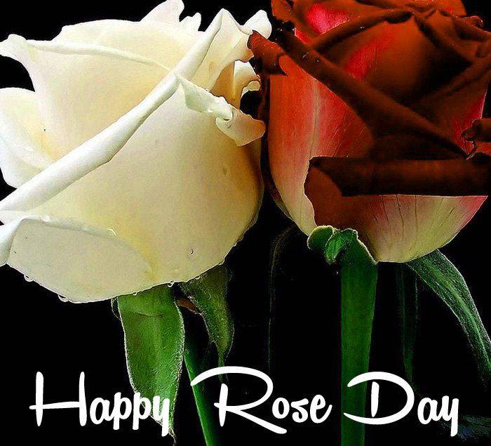 white and red flower Happy Rose Day hd