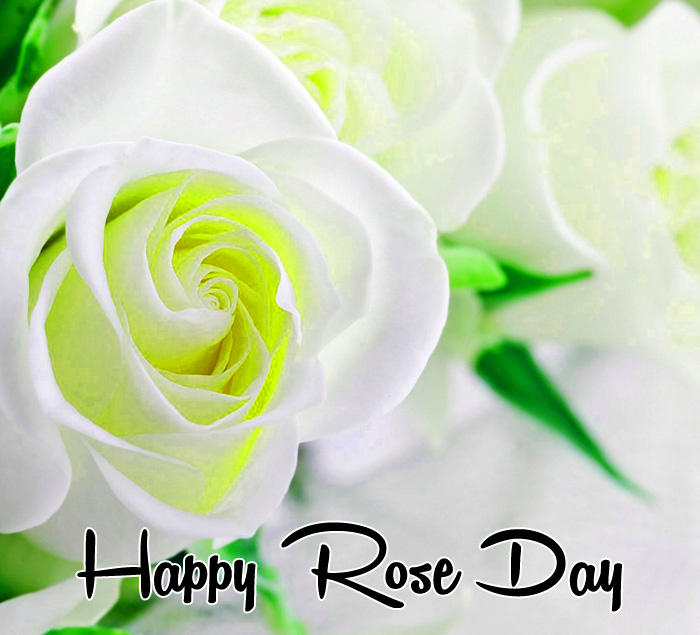 white flower Happy Rose Day pics hd