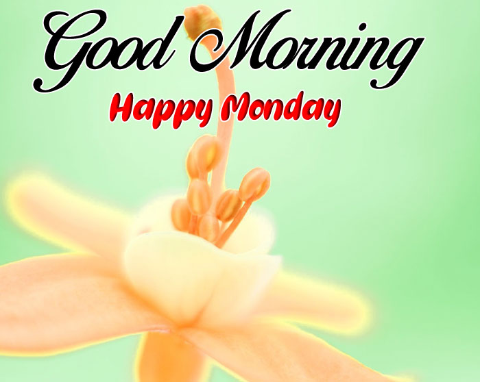 yellow flower Good Morning Happy Monday images hd