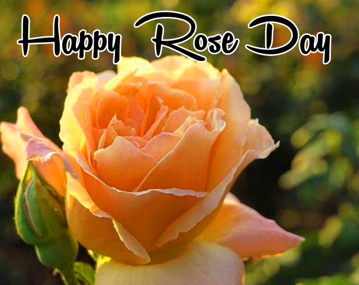yellow flower Happy Rose Day Gift hd