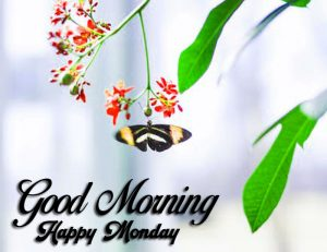 Good Morning Happy monday flower images hd