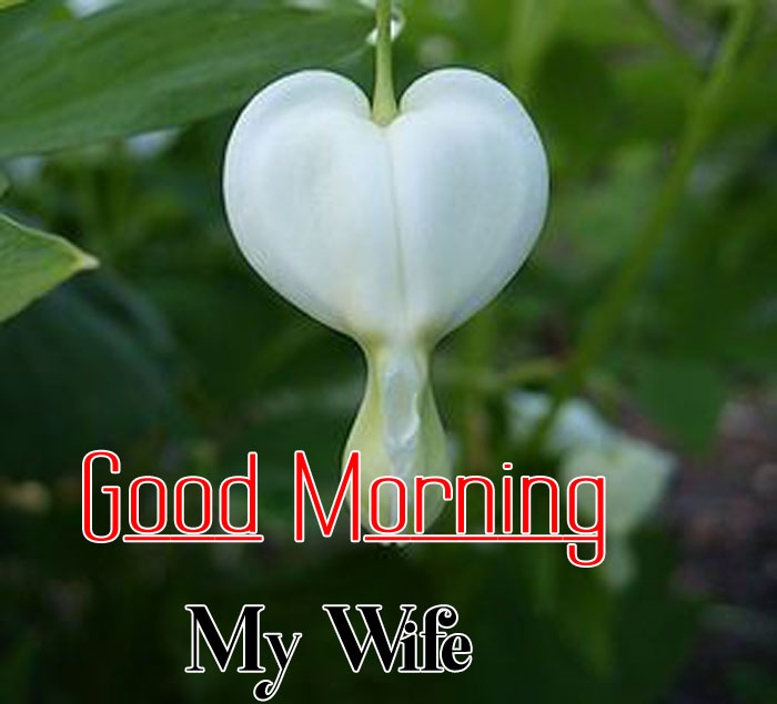 Good Morning My Wife flower images hd