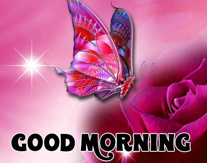 Good Morning red butterfly pics hd