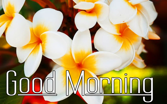 beautiful Good Morning flower images