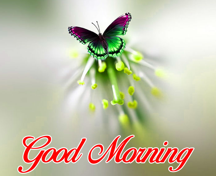 beautiful butterfly Good Morning pics hd