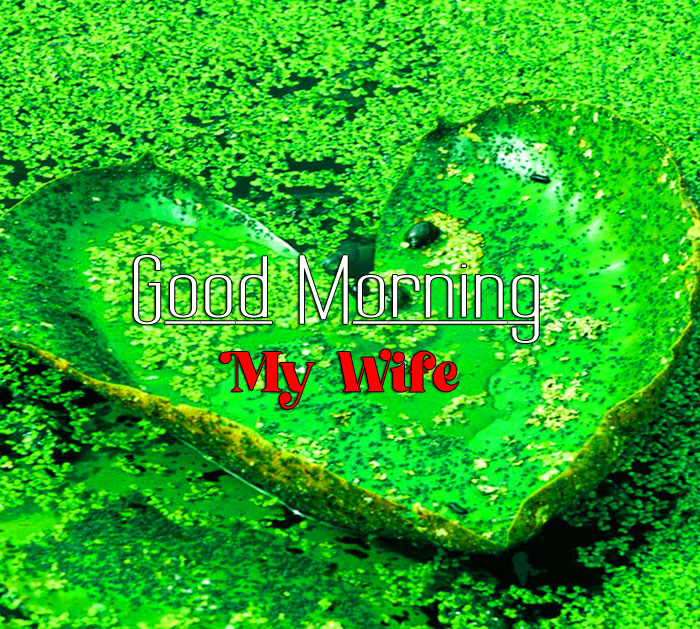beautiful green heart Good Morning My Wife images hd