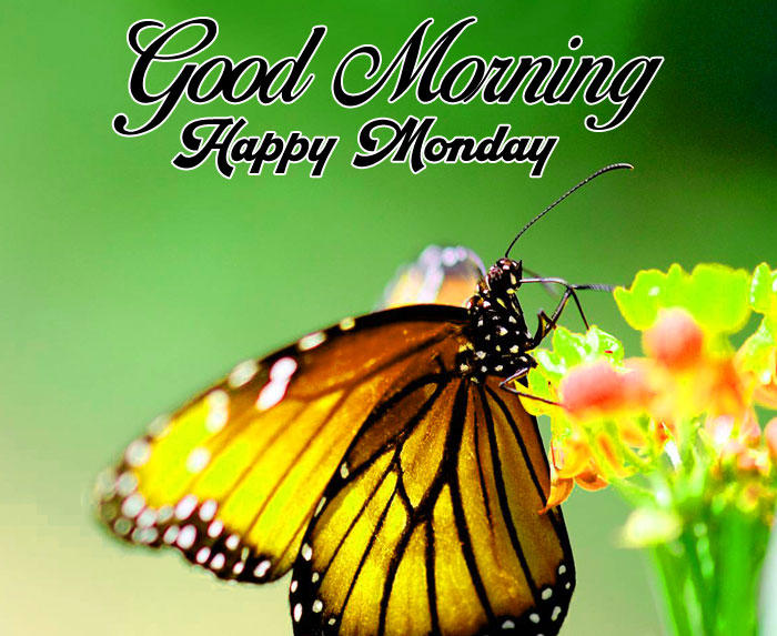 best butterfly Good Morning Happy monday pics hd