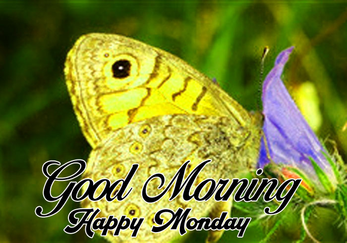 butterfly Good Morning Happy monday hd wallpaper