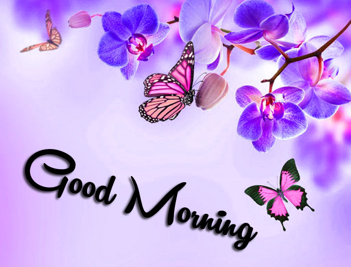 colorful Good Morning flower pics hd