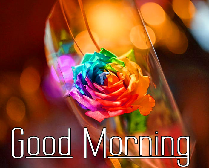 colorful rose Good Morning pics hd