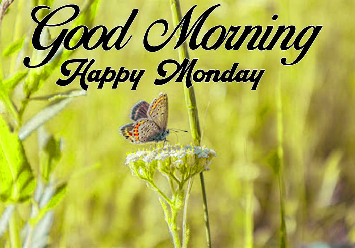 cute butterfly Good Morning Happy monday pics hd