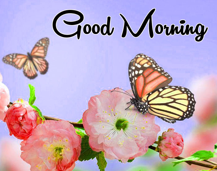 cute butterfly Good Morning pics