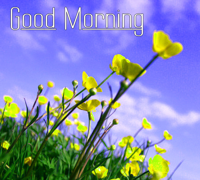 cute yellow flower Good Morning hd wallpaper