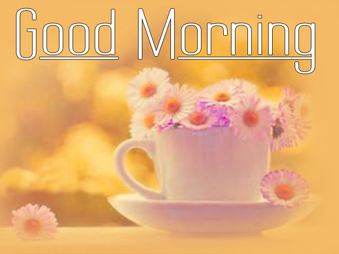 latest Good Morning flower hd wallpaper