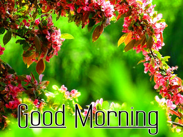 latest Good Morning hd wallpaper