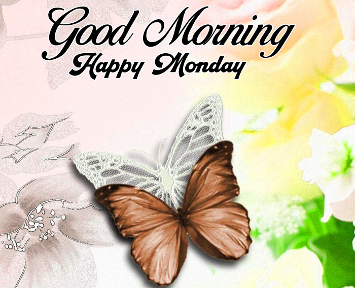 latest butterfly Good Morning Happy monday pics hd