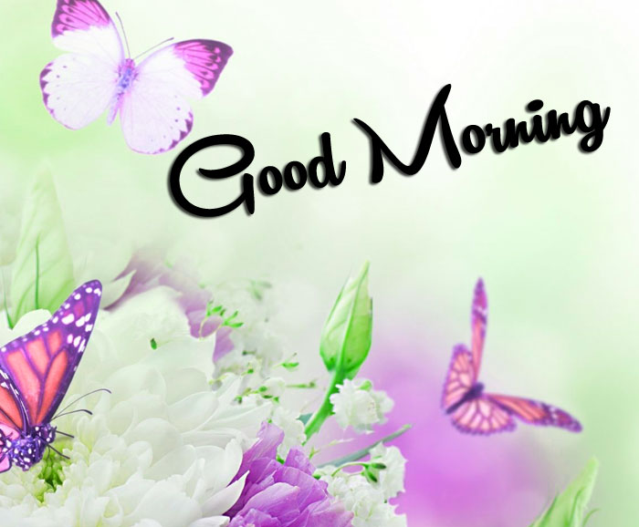 new butterfly Good Morning pics hd