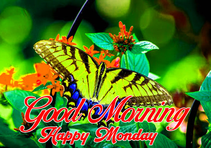 nice Good Morning Happy monday red flower hd