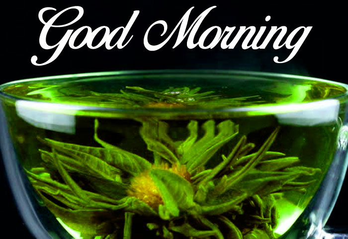nice Good Morning flower images hd