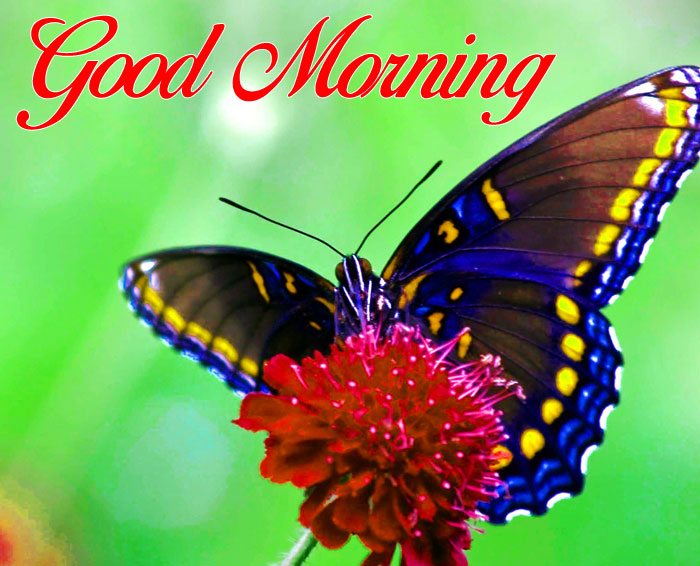 nice black Good Morning pics hd