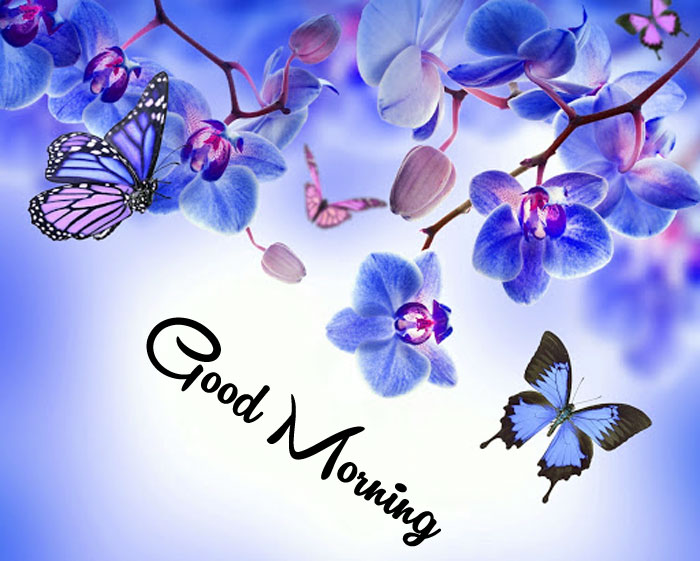 nice blue butterfly Good Morning pics