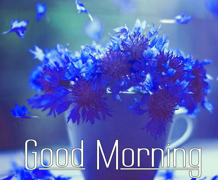 nice blue flower Good Morning photo