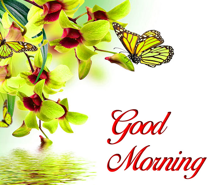 nice butterfly Good Morning pics