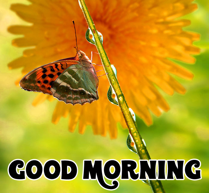 nice butterfly Good Morning wallpaper