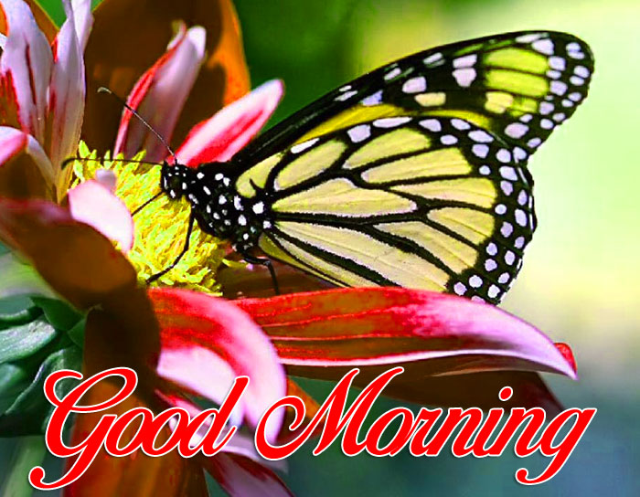 nice colorful Good Morning pics hd