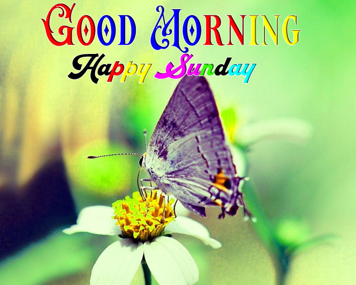 nice cute butterfly Good Morning Happy Sunday hd wallpaper