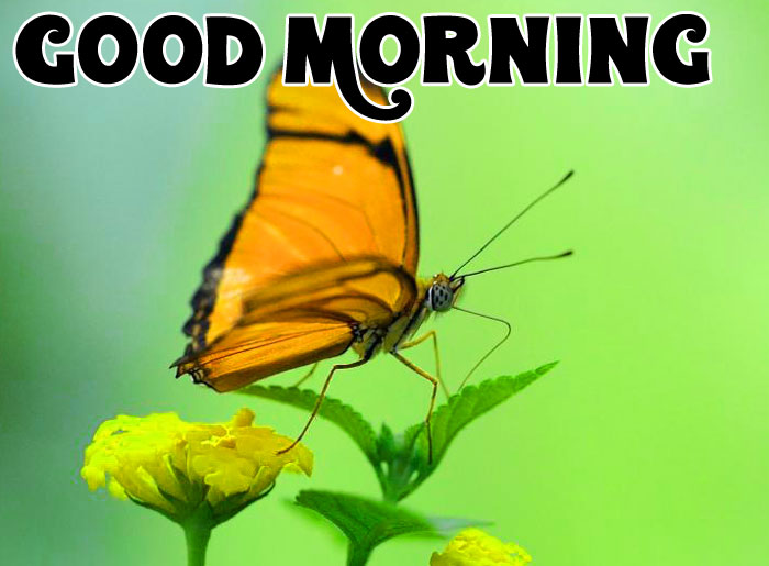 nice cute butterfly Good Morning wallpaper