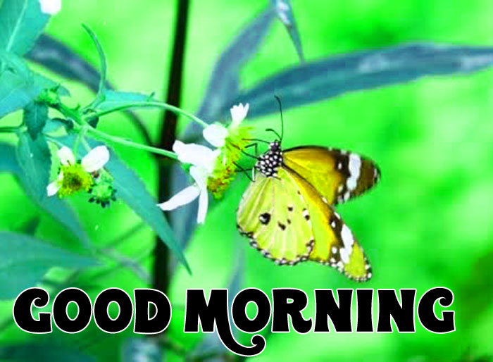 nice nature butterfly Good Morning pics hd