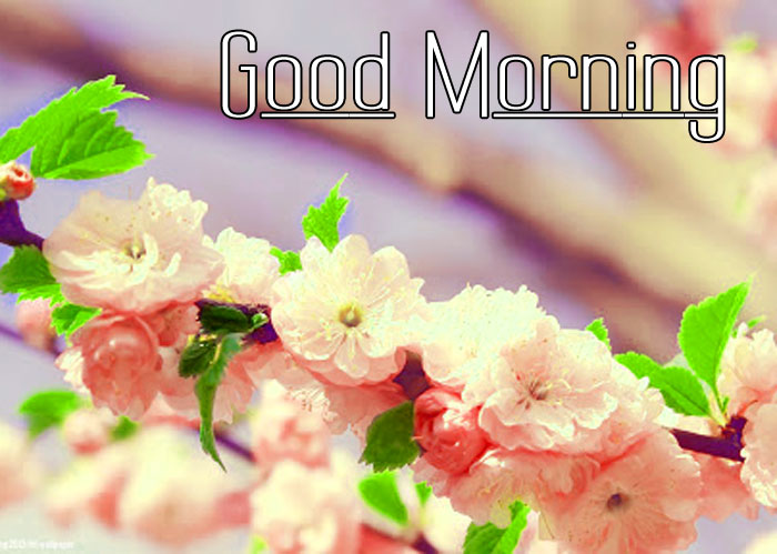 nice small Good Morning pics hd