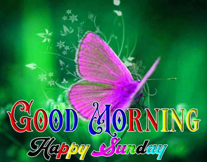 pink butterfly Good Morning Happy Sunday pics hd
