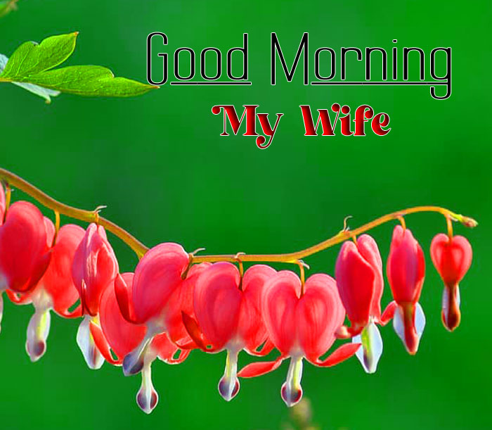 red flower heart Good Morning My Wife images