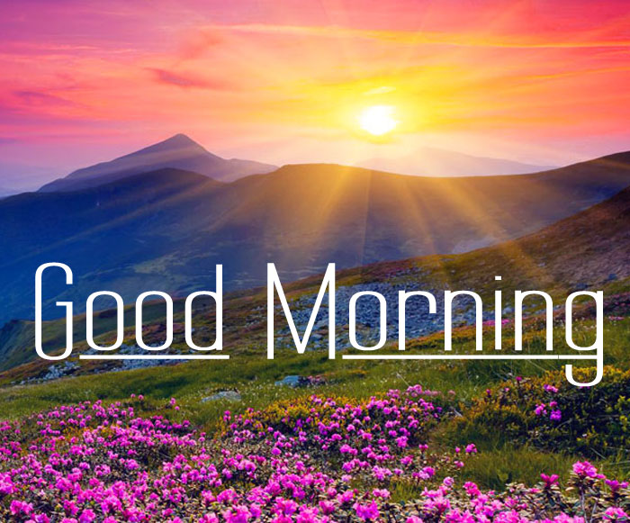 sunrise Good Morning flower images hd